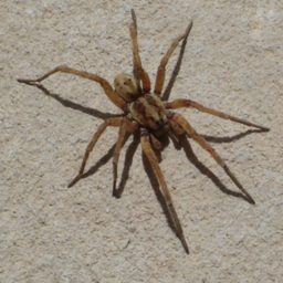 Уничтожение пауков в Ельце